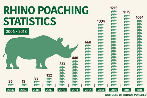 rhino poaching statistics